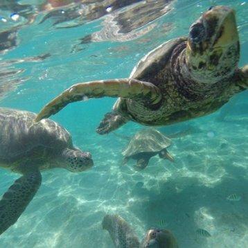 guanaja-divers
